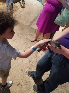 Where can you see baby alligators in Florida?